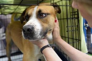 rescatar perros perrera