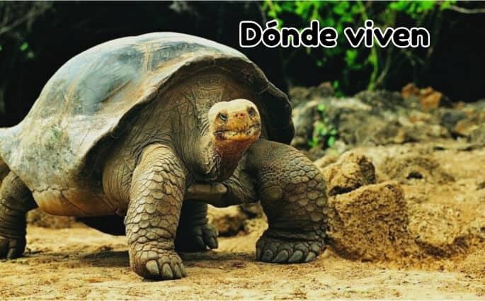 tortuga terrestre dónde viven